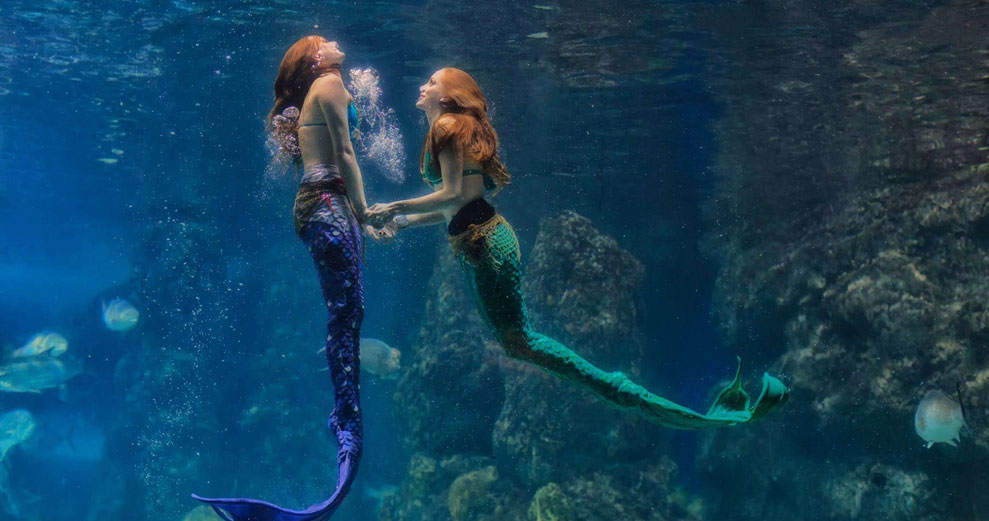 mermaids real or legend essay Real physics 2015 waec objective and essay answers real physics 2015  who became a legend luca caioli the  biology chapter 28 answers why mermaids sing.