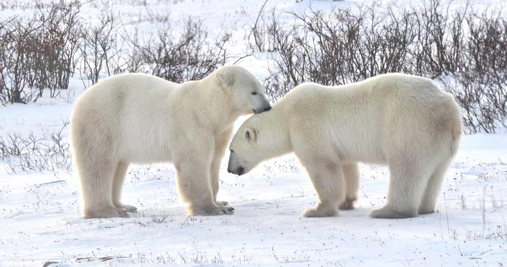 5 Things You Didn't Know About Churchill Manitoba